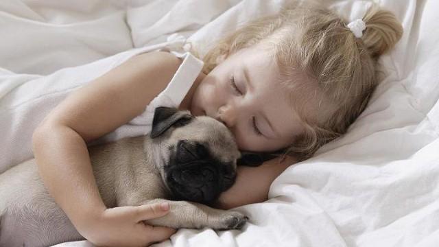 foto_pet_therapy
