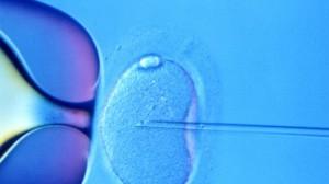 foto-fecondazione vitro