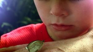foto_bimbo curioso osserva farfalla