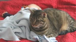 foto_ gatti e bambini