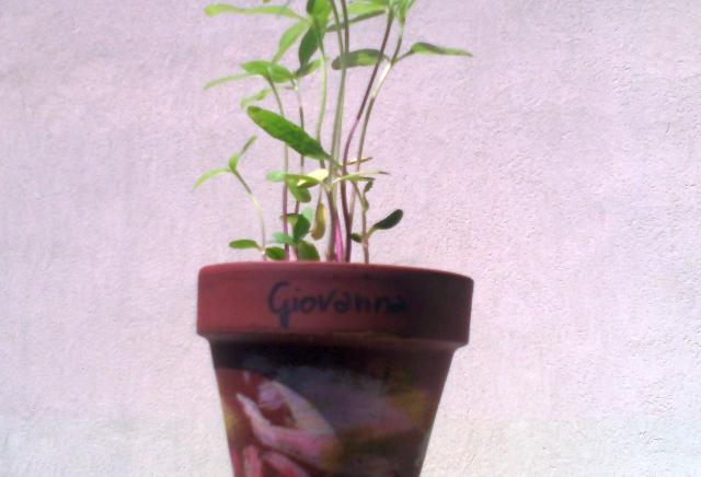 foto-vaso-fiori-crescita