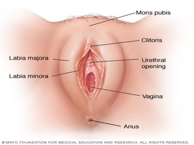infezione vaginale cause