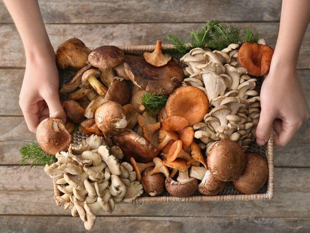 funghi e allattamento