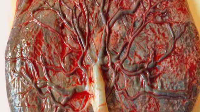 oto_quando_si_forma_la_placenta