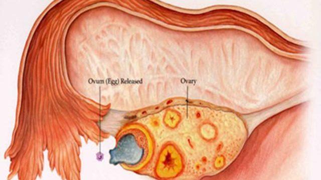 ovulazione tardiva