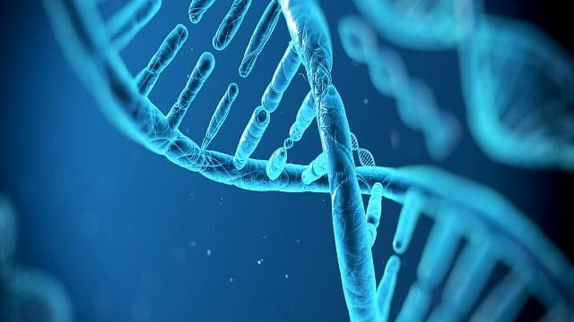sindrome rett genetica