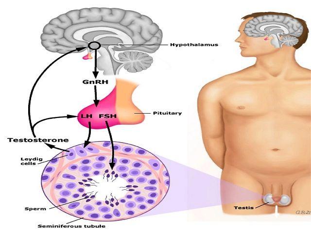 produzione sperma