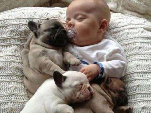 foto bimbo e cane