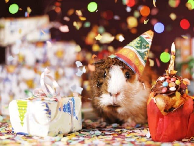 foto buon compleanno divertente 12