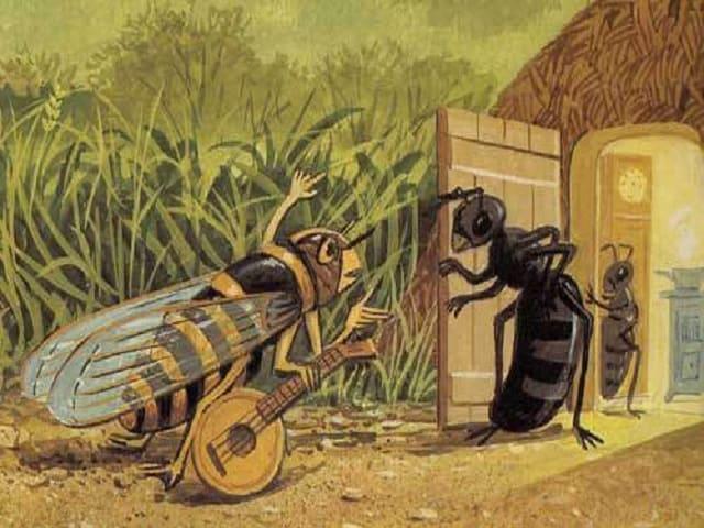 foto cicala va dalla formica