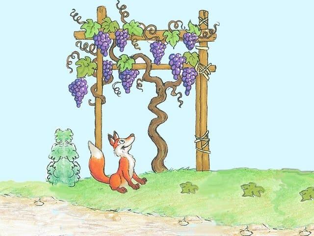 foto la volpe e l'uva 4