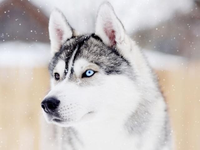 Foto immagini animali cani
