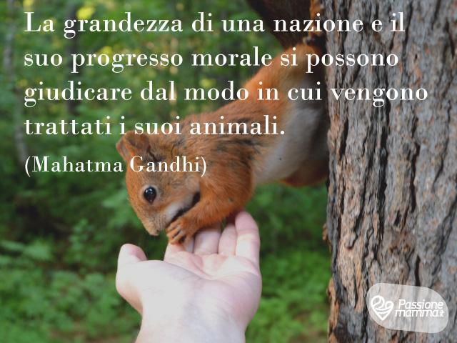 Foto immagini animali frasi