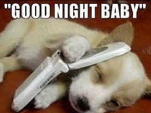 foto buonanotte cane