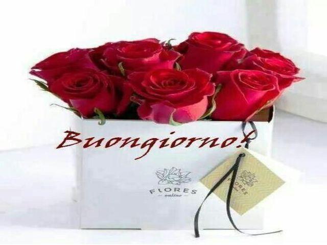 foto buongiorno rose rosse