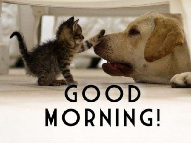 foto buongiorno cane gatto