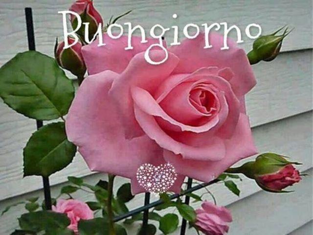 Buongiorno con i fiori: più di 60 immagini e un video da dedicare -  Passione Mamma