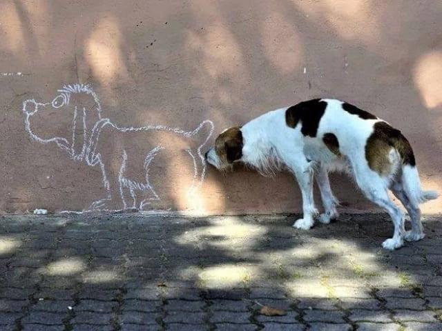 foto divertentissime cane