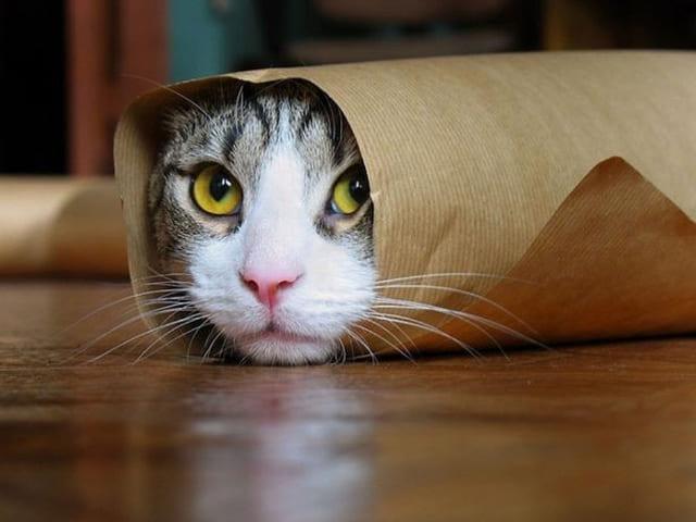 foto divertentissime gatto arrotolato