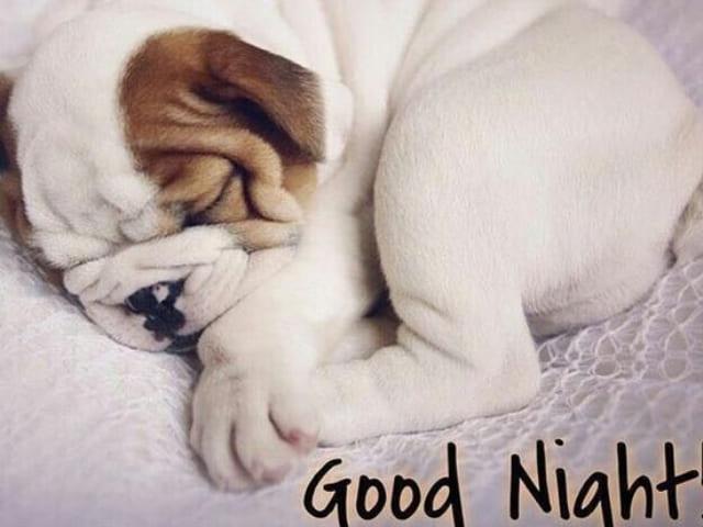 foto immagini belle buonanotte cane2