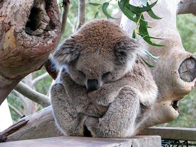 Foto Immagini carine animali