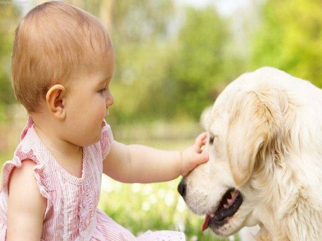 cani e bambini accorgimenti